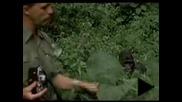 Мъж дори и за миг не трепна пред раздразнената горила!