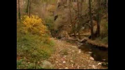 река луковица