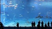Изключителна красота! 2 - рия най - голям аквариум [ H D ]