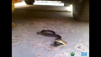 *смях*коте се гаври със змия