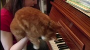 Супер много Смях Котка изнася урок по пиано