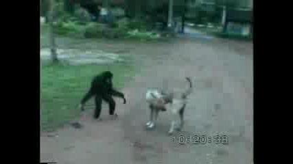 Маймунска Работа