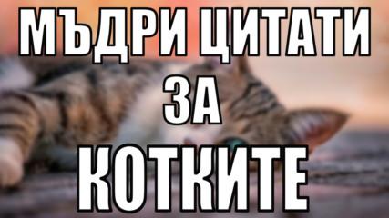 Весели и мъдри цитати за котките