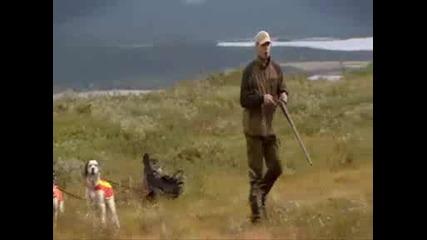 Лов С Кучета Работещи На Стойка