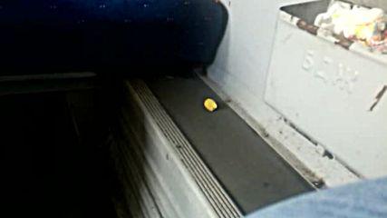 """""""Моята новина"""": Мишка във влака"""
