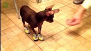 Забавни кучета с пантофки - Компилация 2014