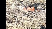 Ethiopia: Rescue operation continues after plane crash kills 157