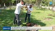 Световна компания и доброволческа организация садят дръвчета