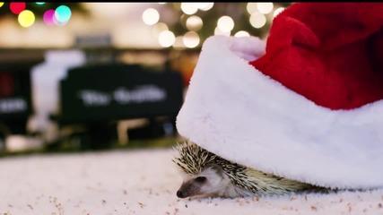 Таралеж си играе по Коледа