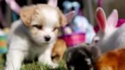 Малки кученца зайчета и пиленца празнуват Великден
