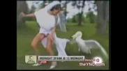 Лебед Напада Булка Хаха