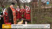 Подрязват лозите в село Черногорово