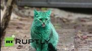 Мистериозна зелена котка от Варна привлече вниманието на чуждестранните медии