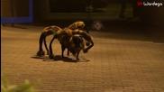 Гигантски паяк плаши хората - Шега