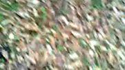 Agaclarin Sonu Cok Fena Her Zaman Ya Imdat Diyor Orman Ya Bizlere 2018 Hd