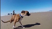 Gopro - Duncan The Two-legged Pup