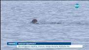 Туристи нападнаха воден спасител във Варна