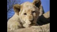 Ian Stuart & Stigger- Lions Roar Bg subs
