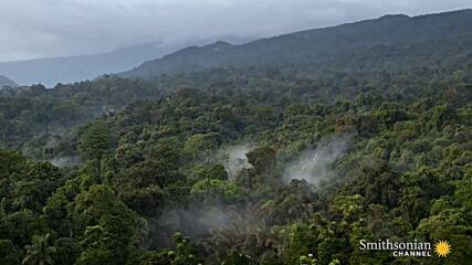 Маймуни от Биоко - Eдин от най-редките примати в света!