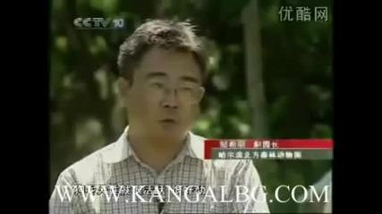 Kangal www.kangalbg.com