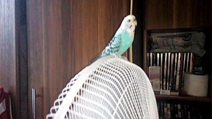 Нашите Папагали