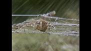 Как да дрогираме паяк