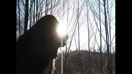каракачанско куче Рекс