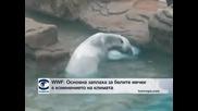 WWF: Основна заплаха за белите мечки е изменението на климата