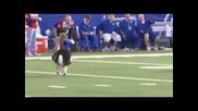 Маймунки яздят кучета като истински каубои