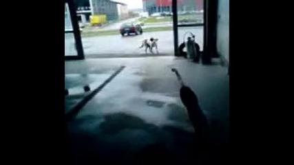 Куче vs. Пароструйка