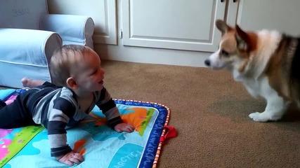 Куче иска да си играе с бебе