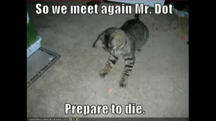 Very Funny Cats 31