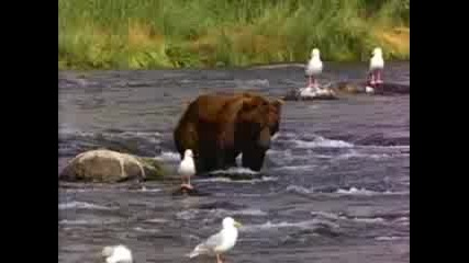 Bear - Мечката От Vista