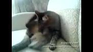 Ето това е котка изверг!! (смях)
