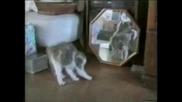 Котка Която Не Е В Ред