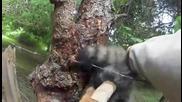 Мъж спасява миеща мечка закачила козината си на ограда от бодлива тел