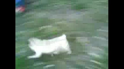 Бягащият Мопс