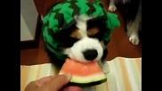 Сладко кученце яде диня