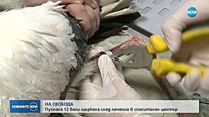 12 бели щъркела бяха пуснати на свобода от спасителния център в Стара Загора