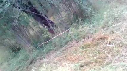Селския двор-епизод 3