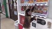 Компилация - Забавни Маймунки 2014