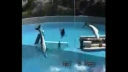 Точен Делфин