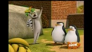 The Penguins of Madagascar - Cute - astrophe