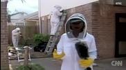 Пчели превръщат къща в огромен кошер