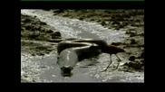 Най - Голяма И Най - Малка Змия