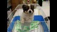 Кученце Казва Елмо Супер Смешно
