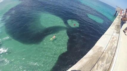 Плуване в огромен пасаж от хамсия