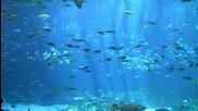 Hd Най - големия аквариум в Света Georgia Aquarium