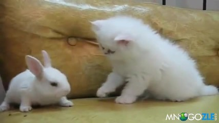 Котешка сапунка