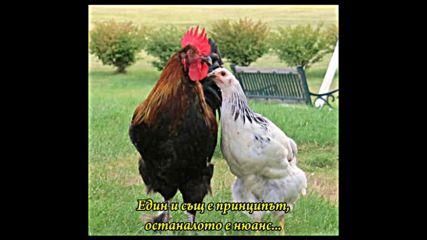 Джордже Балашевич -песен за един петел